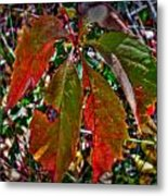 Woodbine Autumn Colors Metal Print