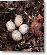 Woodcock Nest And Eggs Metal Print