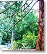 Woodland And Huge Tree Illustration Metal Print