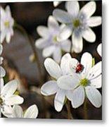 Woodland Flora And Friend Metal Print