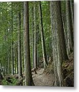 Woodland Forest Path Metal Print