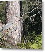 Woodland Great Blue Heron Metal Print