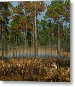Woodland Rainbow Metal Print