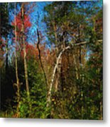 Woodland Ramble Metal Print