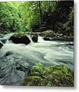 Woodland Stream And Rapids, Time Metal Print