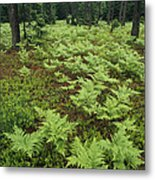 Woodland View In A Pine Forest Metal Print