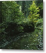 Woodland View With Stream Metal Print