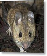 Woodmouse Metal Print
