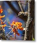 Woodpecker Listening Metal Print