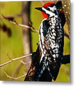 Woodpecker Metal Print