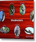 Woodpeckers Metal Print