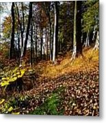 Woods During Autumn Metal Print