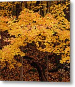 Woods Of Yellow Metal Print