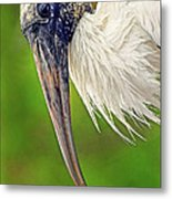 Woodstork Portrait Metal Print