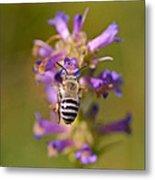 Worker Bee Metal Print