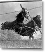 Working Horses Metal Print