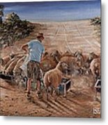 Working Sheep In South-africa Metal Print
