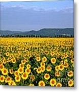 World Of Sunflowers Metal Print