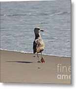 Wounded Bird 6 Hurt Tired Calm Ocean Beach Photos Pictures Bird Seagulls Oceanview Beaches Water Sea Metal Print by Pictures HDR