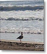 Wounded Seagull 4 Seagulls Birds Photos Beach Beaches Sea Ocean Oceanview Scenic Seaview Art Pics Metal Print
