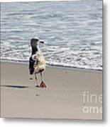 Wounded Seagull 5 Seagulls Bird Beach Beaches Ocean Photos Pictures Art Photography Photograph Image Metal Print