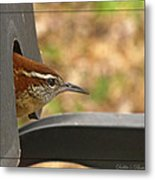 Wren Peeking Out Metal Print