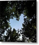 Written On The Wind  Metal Print by Tammy Cantrell