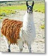 Wyoming Llama - El Tuffo Metal Print