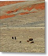 Wyoming Red Cliffs And Buffalo Metal Print