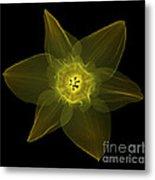 X-ray Of Daffodil Flower Metal Print