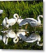 Y-m-c-a Swans Metal Print