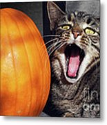 Yawning Vineyard Cat Metal Print