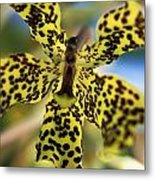 Yellow And Black Spotted Orchid Metal Print