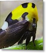 Yellow And Black Treehopper Metal Print
