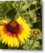 Yellow And Red In The Sunshine Metal Print