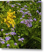 Yellow And Violet Flowers Metal Print