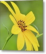 Yellow Artichoke Metal Print