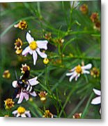 Yellow Banded Black Fly 1 Metal Print
