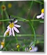 Yellow Banded Black Winged Fly 1 Metal Print