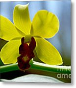Yellow Beauty Metal Print by Pravine Chester