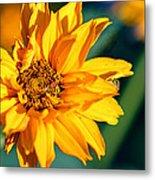 Yellow Beauty Metal Print by Rourke