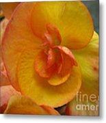 Yellow Begonia Metal Print