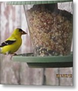 Yellow Bird Up Close Metal Print