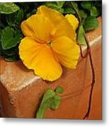 Yellow Blossom On Planter Metal Print
