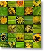 Yellow Blossoms Metal Print by Fine Art  Photography