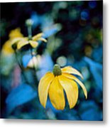 Yellow Cone Flower On Blue Background Metal Print by Marcio Faustino