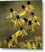Yellow Coneflowers Metal Print