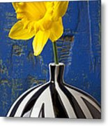 Yellow Daffodil In Striped Vase Metal Print