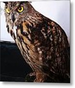 Yellow-eyed Owl Side Metal Print