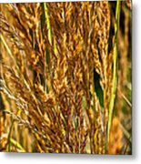 Yellow Feather Reed Grass Metal Print
